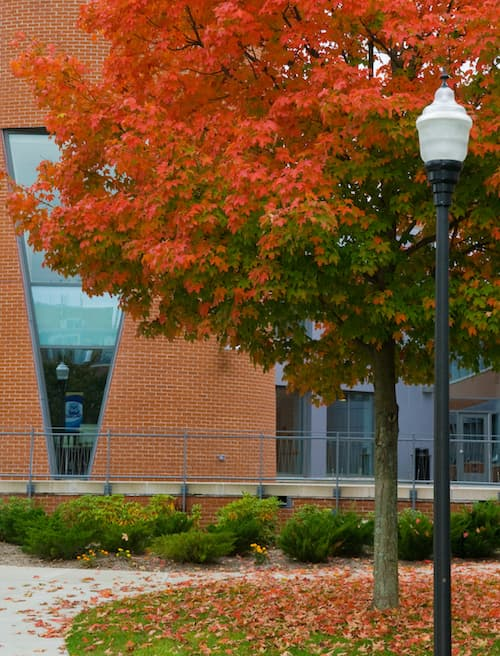 SCSU during fall