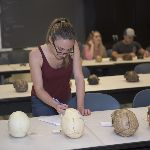 Students observing human skulls