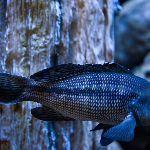 A fish swimming around